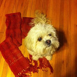 scarf 9.2